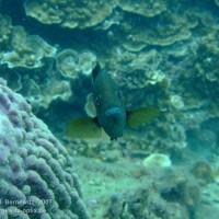Unter Wasser vor 2012