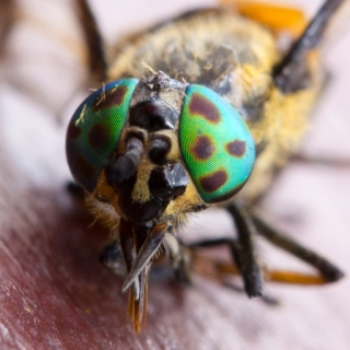 Tiere/Insekten 2014